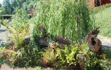 Le jardin botanique Vinh LUU